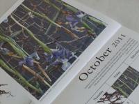 South African Flower Union Calendar 2011