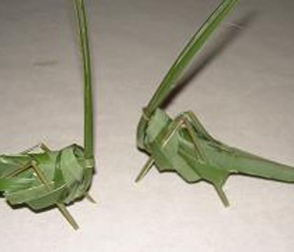 Palm leaf Hopper-flies (grasshoppers and butterflies)