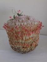 Protea Composite