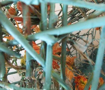 Reed Hourglass