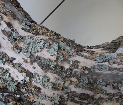 Bark covered Wreath