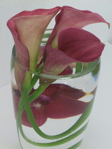 Crossing the calla stems