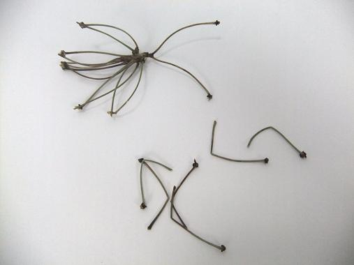 Six insect stick legs