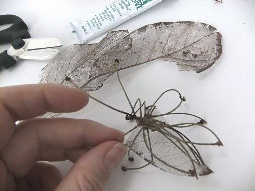 Skeleton leaf wings for my stick insect