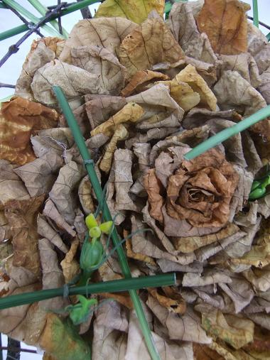 When Autumn Fall dried leaf rosette rose