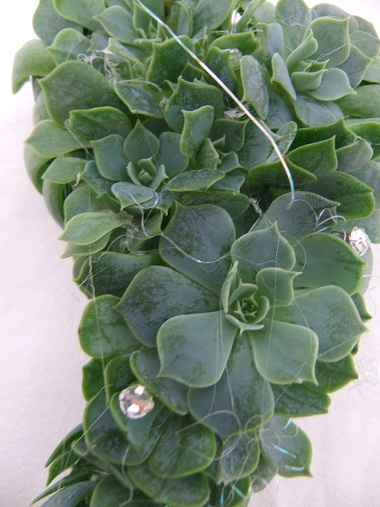 Corsage design with Echeveria rosettes and leaves