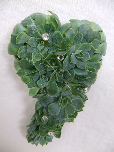 Elongated heart shape Echeveria waist corsage