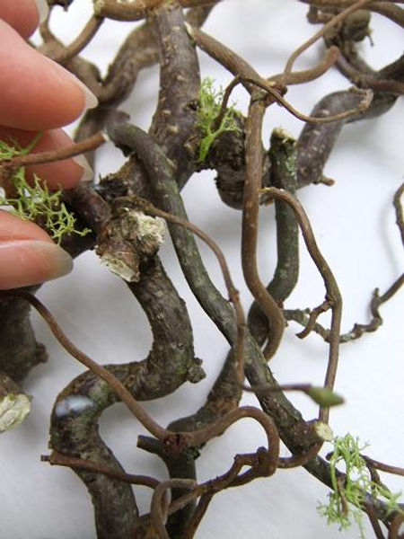 Glue the reindeer moss on to the wreath