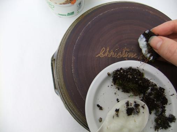 Paint the terracotta pot with yogurt using the moss