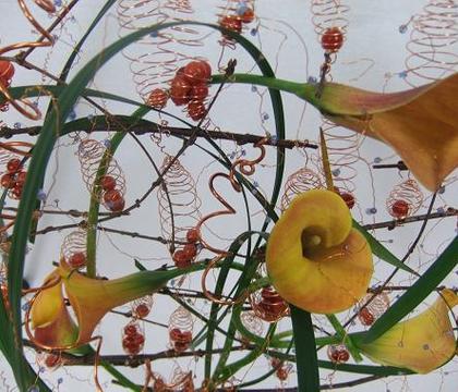 Zantedeschia - Calla Lily, Arum Lily