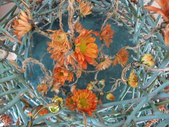 "Chrysanthemum - Chrysanthemum or ""mums"""