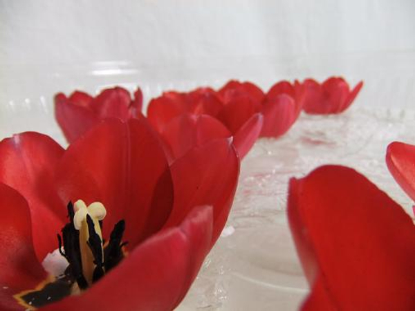 Float tulips in a shallow dish