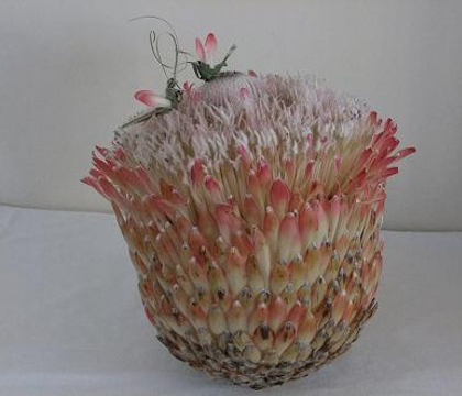 Protea - Protea (but each variety also has a common name)