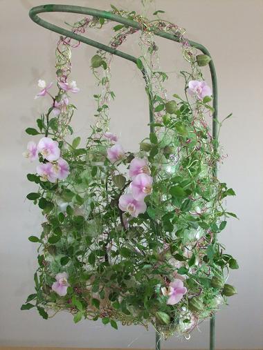 Lathyrus - Sweet pea