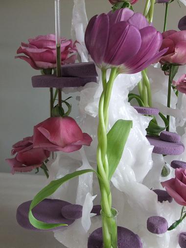 Tulipa - Tulip