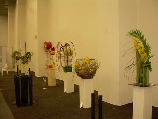 Veiled Sunshine:50th Anniversary of the South African Orchid Society