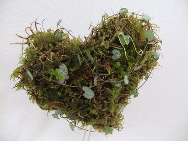 Growing moss heart for Valentines Day