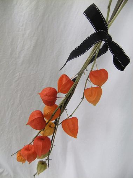 Drying Physalis (Chinese lanterns) .