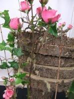 A Floral Fable:  Floriograpy Design