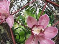 A Floral Fable:  Colour Design