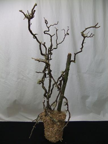 Twig armature as a permanent design in a container