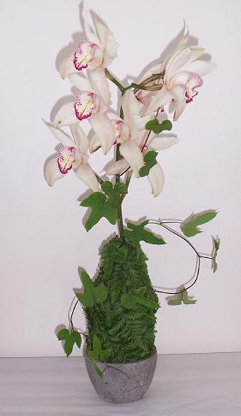 A stem of Boat Orchids.