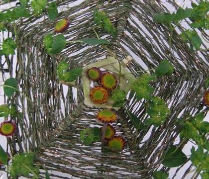 Bupleurum rotundifolium: - Bupleurum, Thoroughwax