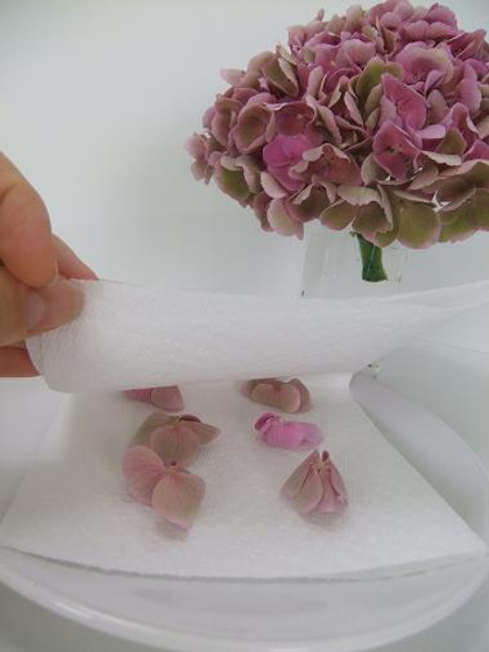 Place the flowers between layers of paper towels to absorb the moisture.