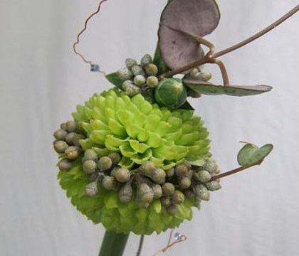 Ceropegia woodii - Rosary vine,  Chain of Hearts, Collar of hearts and String of hearts