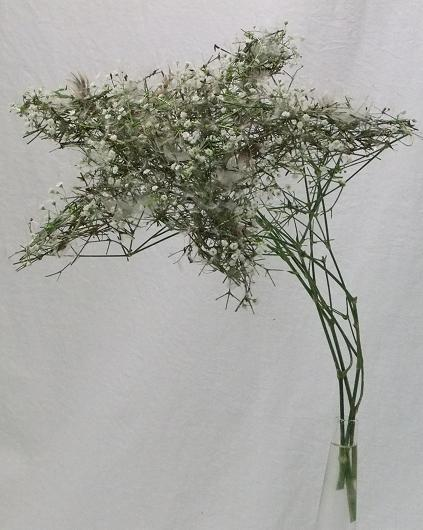 Floral Art design Gypsophila and Dandelion shooting star.
