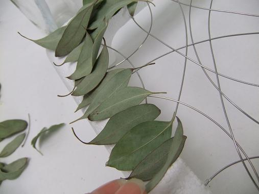 Follow the natural curve of the eucalyptus leaves.