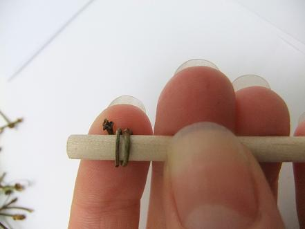 For a larger spiral wrap the twig around a dowel stick.