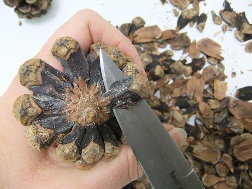 Tutorials Peel A Pine Cone