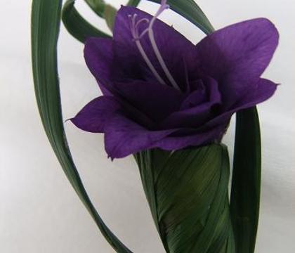 Gladiolus - Gladiolus, Sword lily, Corn Lilies, gladioluses, glads,  plural: gladioli
