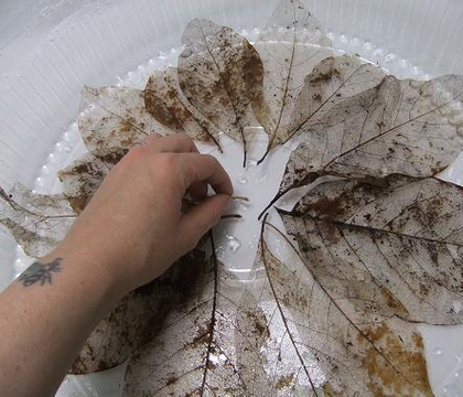 Stiffen and set skeletonized leaves into a whirl