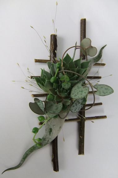 Senecio Rowleanus  - String of Beads, String of Pearls