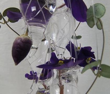 Saintpaulia - African violet