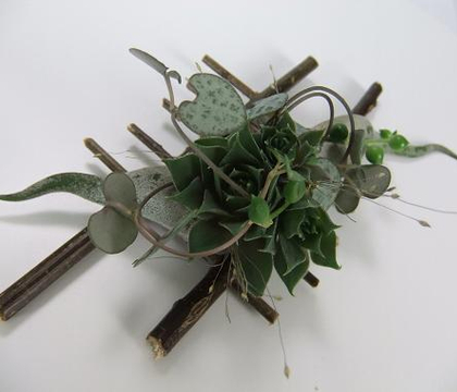 Tillandsia - Air plants