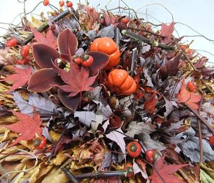 Solanum Integrifolium - Pumpkin tree plant, pumpkin-on-a-stick or pumpkin bush, Japanese golden egg, Chinese scarlet eggplant, Hmong eggplant or tomato eggplant.