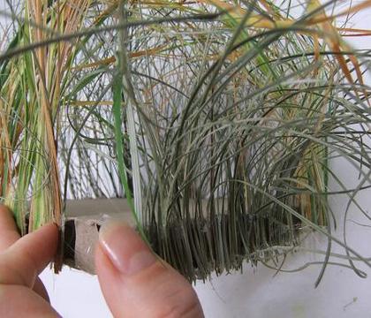 Ripped Grass Frame