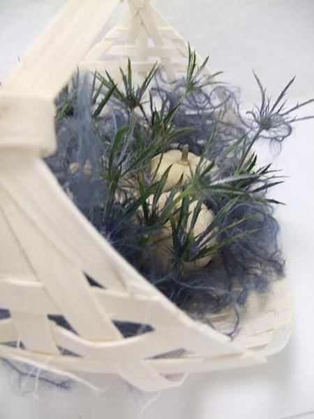 Eryngium  - Sea holly