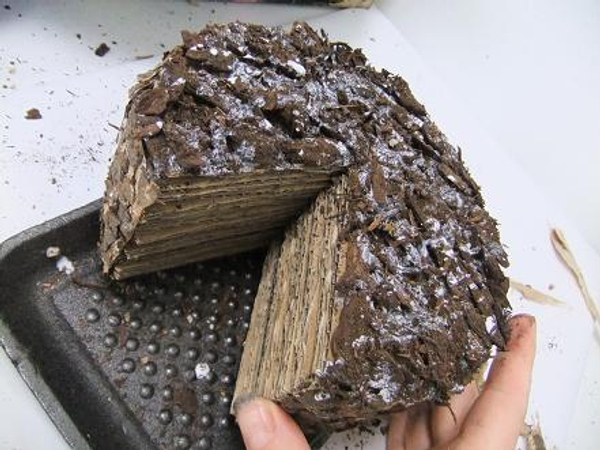 Set the cardboard cake aside to dry completely