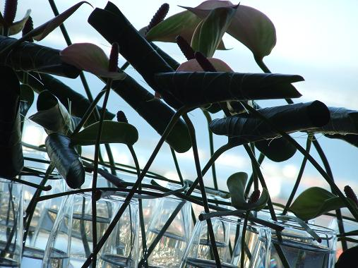 Roll the green Anthurium foliage into tubes