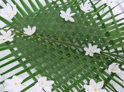 Paper whites floating on palm leaves