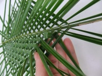 Twin Leaf Weave