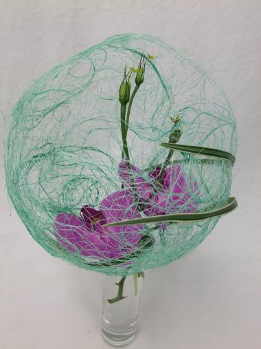 Orchids in a sisal bubble