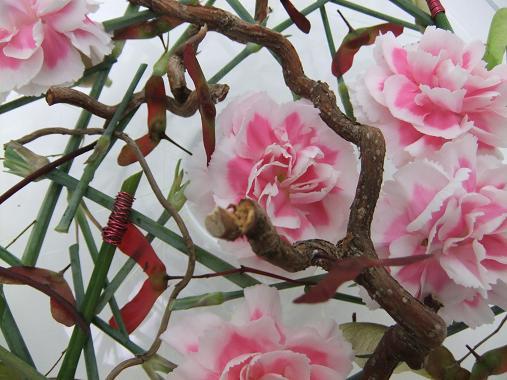 Dianthus - Pink, Carnation, Clove Pink, Chinese Pink