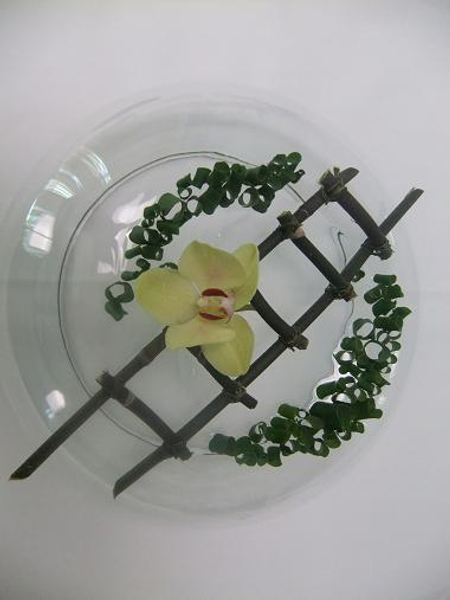 Phalaenopsis stem ladder.jpg
