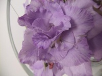 Longer lasting Gladiolus Composite Flower
