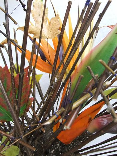 Bird of paradise flowers in a twig armature.